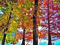 Colorful Lakeside Trees in Photo Paint