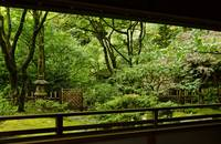Through the Teahouse Window