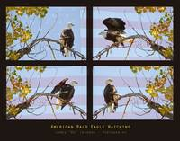 USA American Bald Eagle Watching Poster