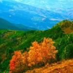 """""""""""Autumn"""