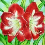 """Amaryllis"" by joeyartist"
