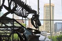 The Tyrannosaurus That Ate Baltimore