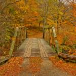 Autumn Orange colors