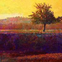 lone tree sunset Art Prints & Posters by r christopher vest