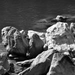 """""""Rocks at Lake James, North Carolina"""" by smayer"""