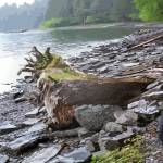 """Rain Forest Alaska Shore Line"" by garlandoldham"