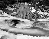 Tree Stump and Icy Stream