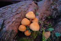 Autumn Mushrooms in St Andrews