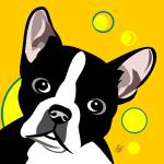 """Boston Terrier"" by waterart"