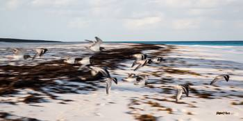 Harbour Island Sea Birds #1_24x48