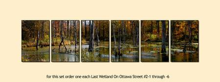 Last Wetland On Ottawa Street #2 Six Panel Sample