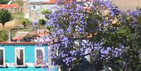 Jacaranda is magic