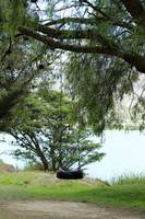 Tire Swing in a Tree