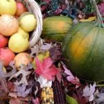 """Harvest"" by vpicks"