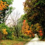 """""""Autumn on the Dirt Roads"""" by patsphotos"""