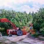Florida Orange Groves- Days of Plenty