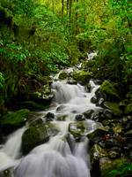 Rainforest Streams of New Zealand
