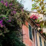"""Bougainvillea, Geraniums - Italian Villa"" by FranklinThompson"