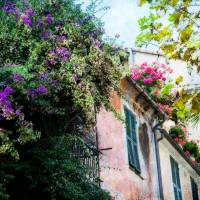 Bougainvillea, Geraniums - Italian Villa Art Prints & Posters by Franklin Thompson