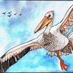 """""""A Pelican Can"""" by ChrisCrowley"""