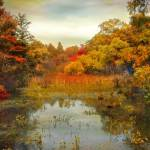 """Autumn Wetlands"" by JessicaJenney"