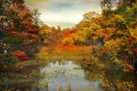 Autumn Wetlands