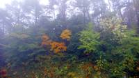 Fogs of Autumn