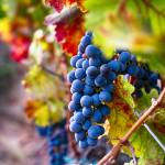"""Bounty of Napa Valley I"" by George_Oze"