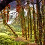 """""""Enigma Trees"""" by zenin"""