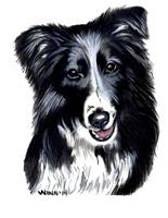 Border Collie Pet Portrait - Rascal