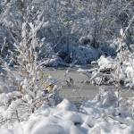 """Frozen Wnter Creek & Snow cover landscape"" by Samantha_Adcock"