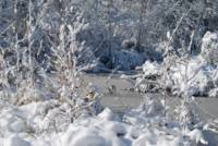 Frozen Wnter Creek & Snow cover landscape