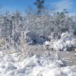 """NC Winter Creek Snow Dusted landcape"" by Samantha_Adcock"