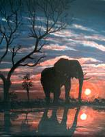 Elephant at the water  at sunset