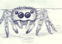 fuzzy wuzzy was a spider