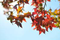Fall Colors 1