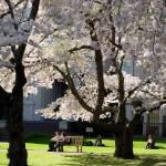 """""""Sakura on Campus"""" by iMage07"""