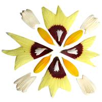 Mandala Blessing Sunflower, Hibiscus, Dianthus and