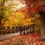 """Footbridge Crossing"" by JessicaJenney"