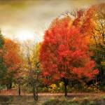 """Fall Aflame"" by JessicaJenney"