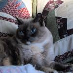"""""""Miss Susie Q"""" by 2cats2"""