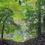 """IMG_6329 The Woodpath"" by outdoorsintheeast"