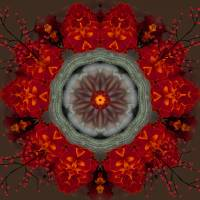 Harvest Wreath Mandala Art Prints & Posters by Diane Lynn Hix