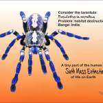 """Consider the Tarantula"" by Isacat"