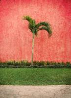 Palm on Red Wall