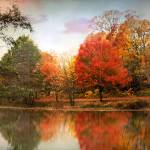 """Autumn Twilight"" by JessicaJenney"
