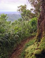Manoa Cliff Trail