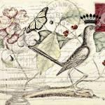 """Royal mockingbird"" by lizmix"