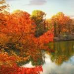 """Autumn Splendor"" by JessicaJenney"