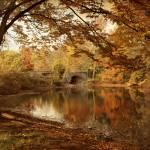"""Autumn Serenity"" by JessicaJenney"
